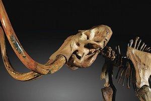 Выставка Мир млекопитающих