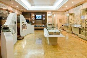 Выставка Мир древней жизни
