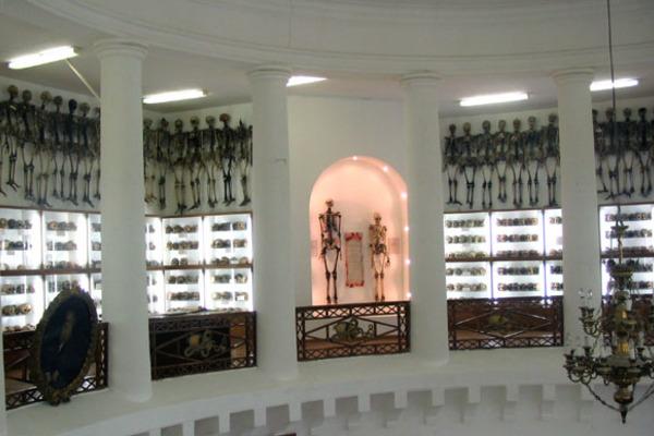 Музей кафедры нормальной анатомии Казанского государственного медицинского университета