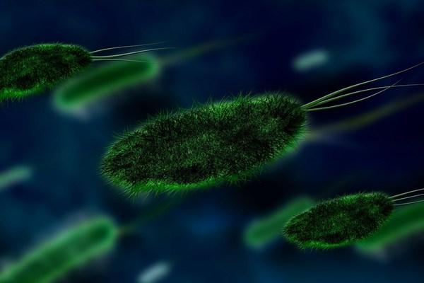 Микробия – невидимая вселенная