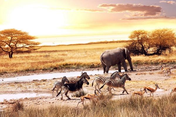 Сергей Ястржембский. Африка: Zoom In/Zoom Out