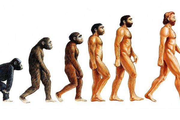 Происхождение и становление человека