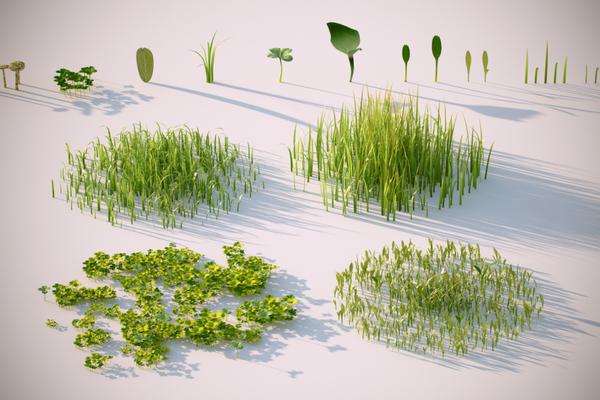 Растения, грибы, бактерии