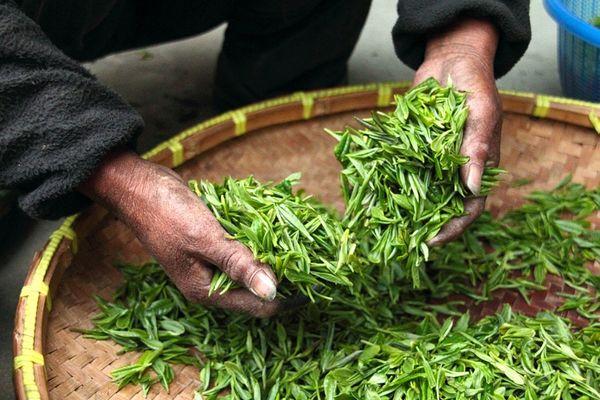 Демонстрация японского чайного искусства
