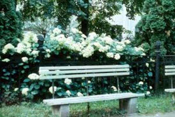 Сад Травникова