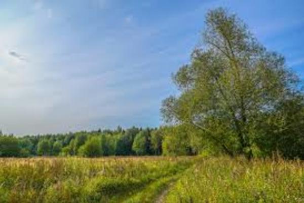 Бирюлёвский лесопарк