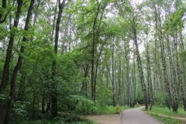 Юго-Западный лесопарк