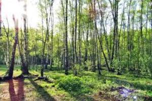 Алёшкинский лес