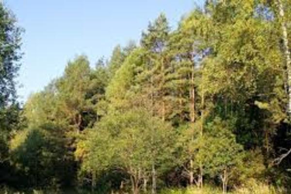 Валуевский лесопарк