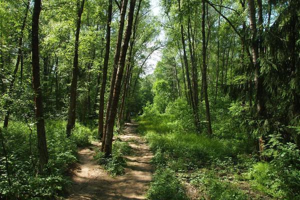 Ульяновский лесопарк