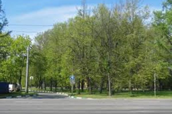 Кушелевский сквер