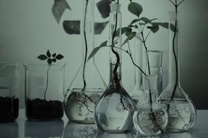 Ботанический бум