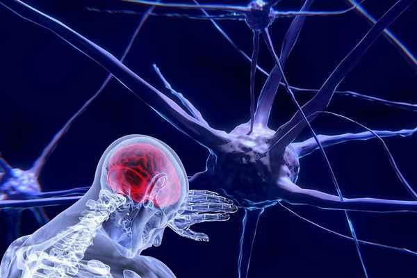Вячеслав Дубынин: «Нейроэстетика: что наш мозг считает красивым»
