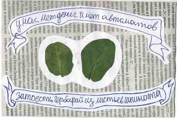 У нас нет денег и нет автоматов — зато есть гербарий из листьев шпината