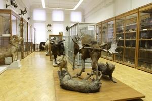 Зоологический музей и гербарий им. Э.А. Эверсмана