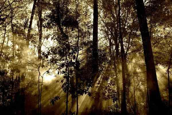Лес дьявола