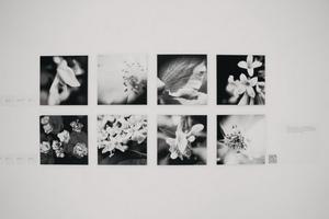 Флора. Жизнь