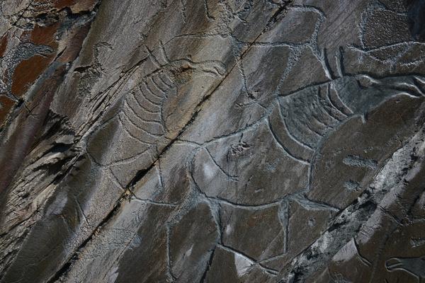 Тайны древностей и наскальной живописи Сибири и Дальнего Востока
