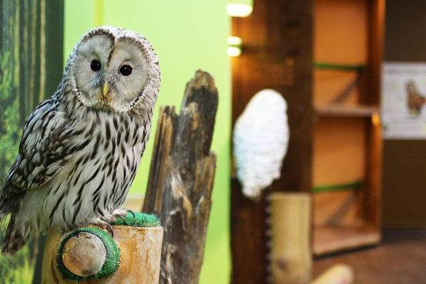Совиный дом | Owldom