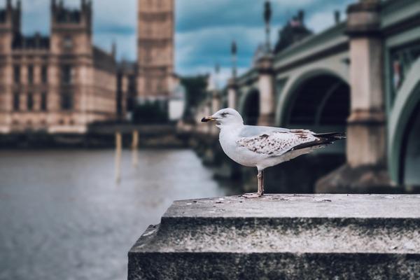 Сокровища Туманного Альбиона: Музыка Великобритании