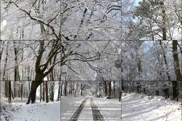 Уолдгейтский лес, зима, 2010