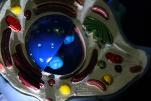 Мозг: Вселенная внутри нас