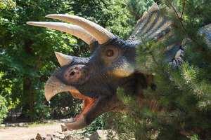 По следам динозавров