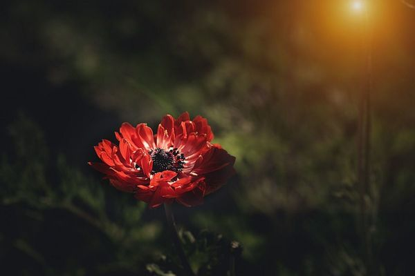 Секреты уфимского аленького цветочка