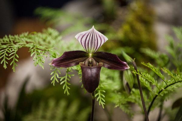 Планета орхидей