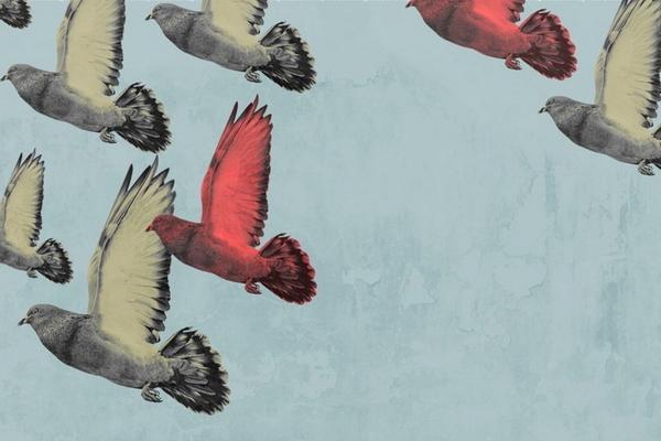 Птица поэта