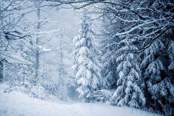 Зимняя сказка с Топелиусом