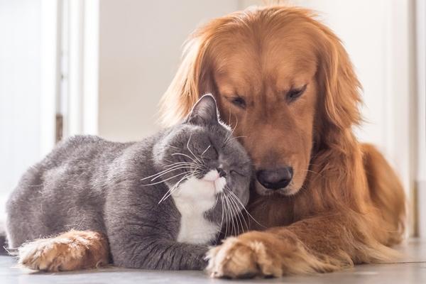 Кормление собак и кошек: особенности кормления взрослых собак и кошек, репродуктивный период, нормализация веса