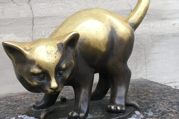 Кошачий Петербург, или Приключения кота Тимофея