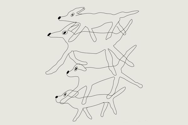 Куда бегут собаки