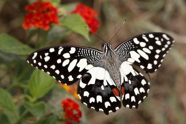 День бабочки