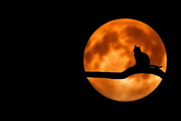 Ночь Т