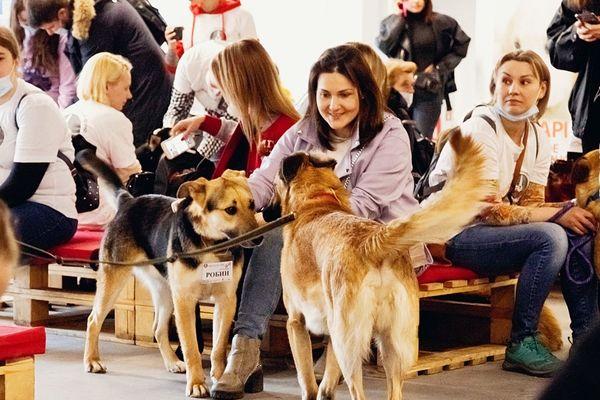10-й юбилейный фестиваль «Собаки, которые любят»