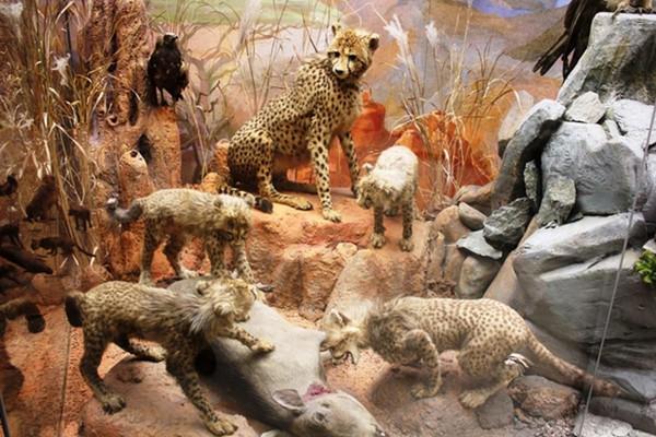 Секреты Дарвиновского музея: что, где, когда?