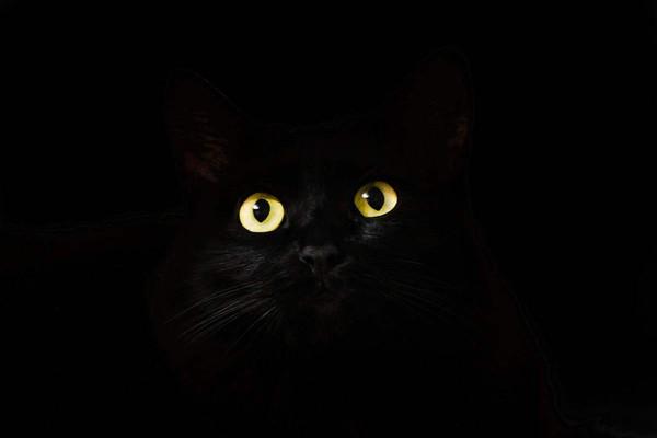"""Кабаре """"Черный кот"""""""