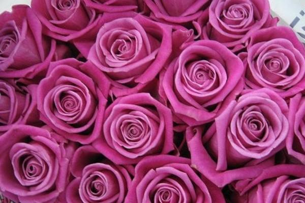 Duty Free Flowers
