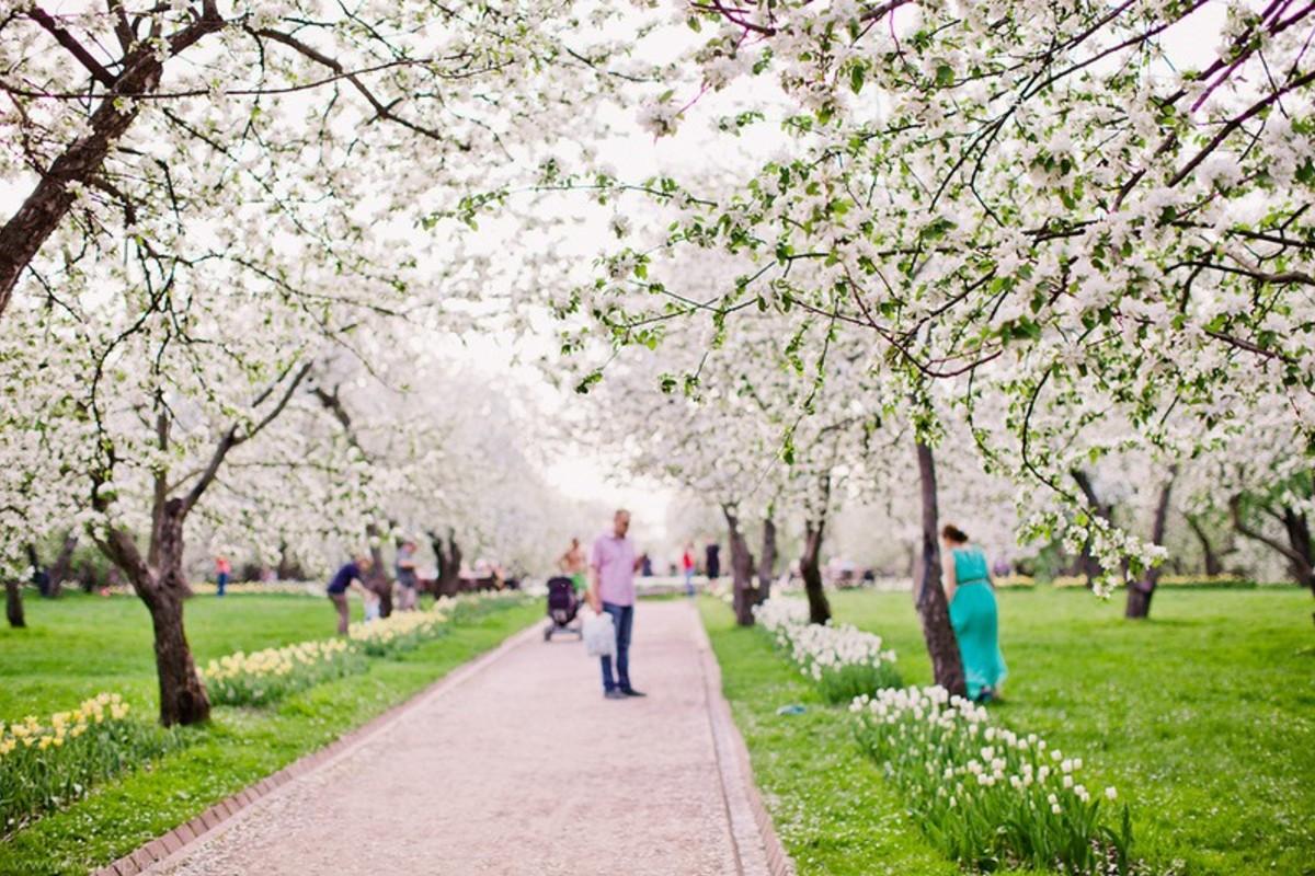 лежала недалеко красивое место для фото весной москва микросхемы