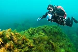 Black Sea Divers