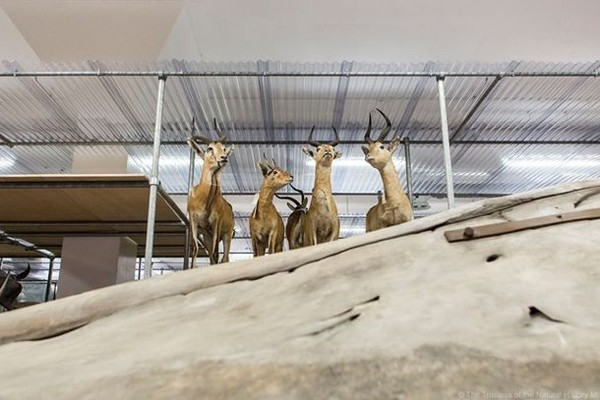 Members' Behind the Scenes Tour: The Mam